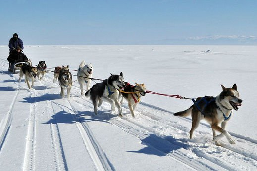 DOG SLEDDING image
