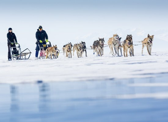 Dog sledding tour image