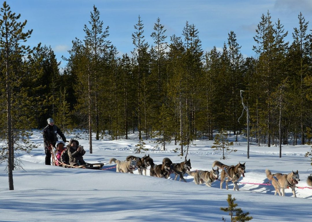 Husky park and sledging image